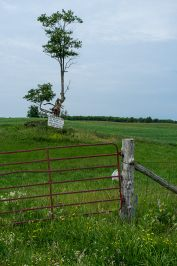 """Agriculture, like this old tree... slowly fading away"""