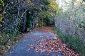 autumn on the galloping goose trail