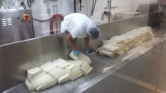 Traditional Cheese making!