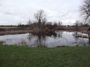 Pond full Feb 2013. But azolla lurking!