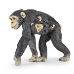Chimpanzé et bébé