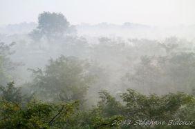 chitwan02