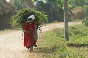 chitwan25