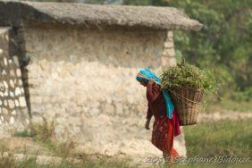 chitwan26