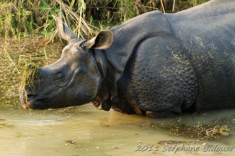 The Chitwan national park