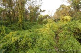 chitwan47