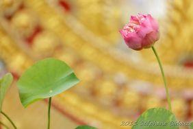 Thailande_6563