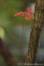 Japon 2011_00590