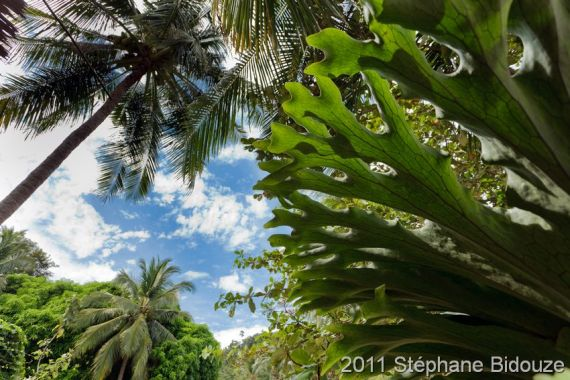 plants in jungle