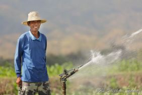 asian farmer watering