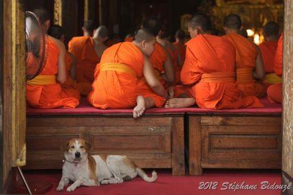 Thailande III_04426