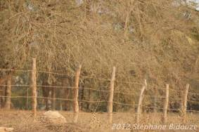 elefantasia165