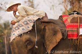 elefantasia180