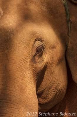 elefantasia201
