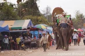 elefantasia225