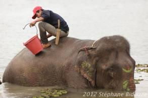 elefantasia270