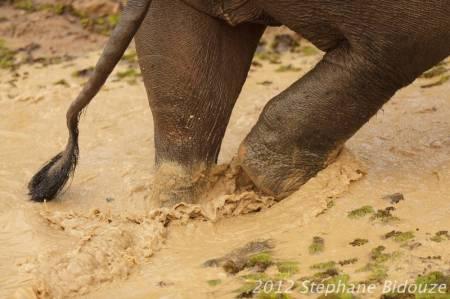elefantasia275