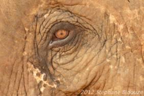 elefantasia282
