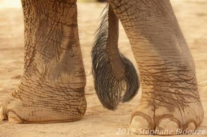 elefantasia284