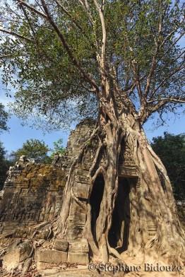 Entangled temple door