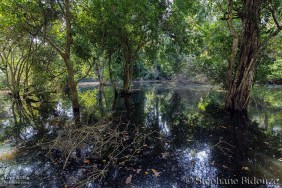 Tropical swamp