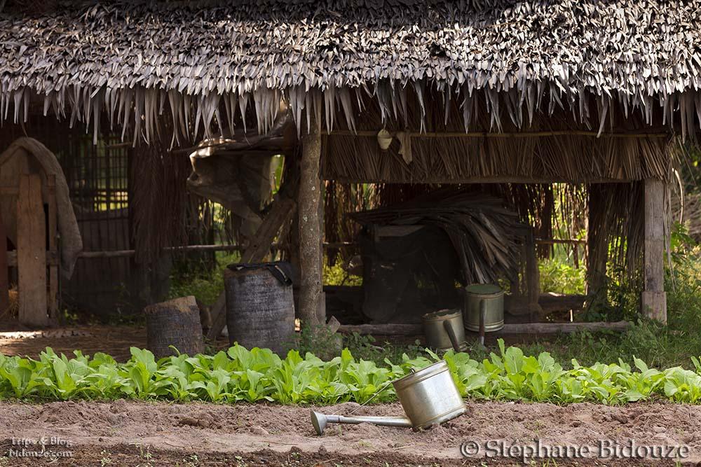 cambodge campagne 10