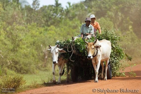 cambodge campagne 33