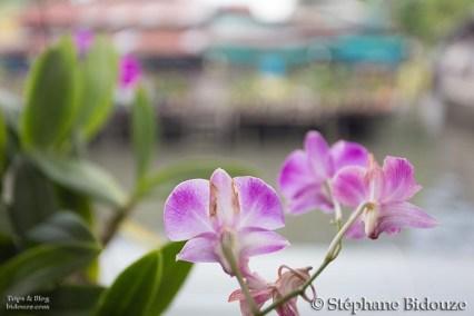 orchidée-bangkok-thailande