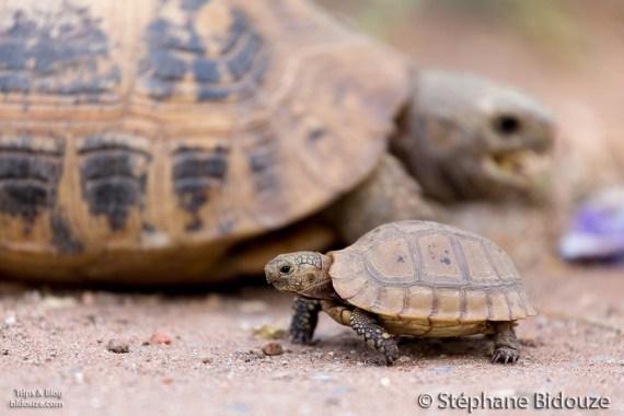 turtle-village-thailand