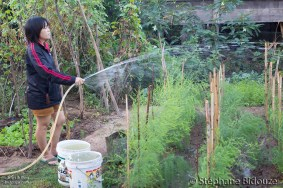 woman-watering-vegetable-thai