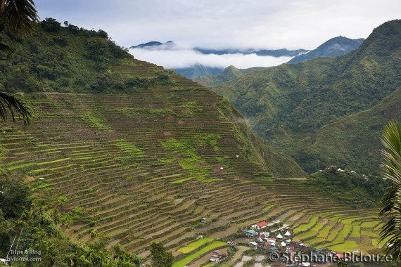 batad-rice-field