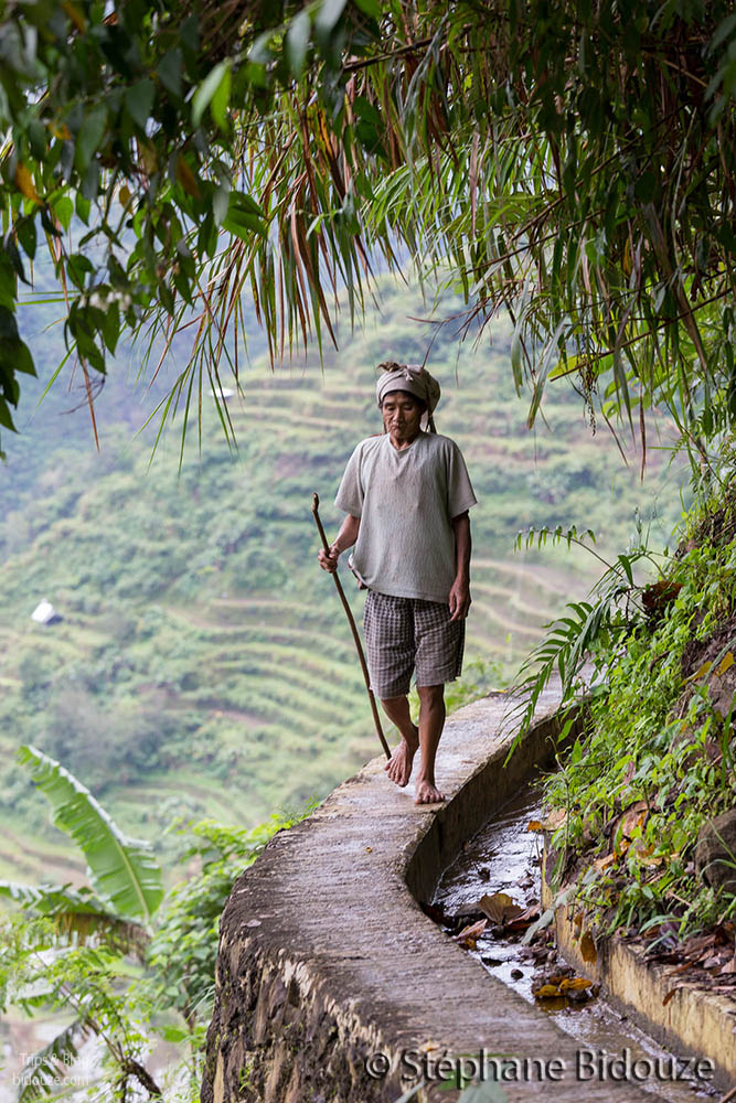 Ifugao walking on rice terrace wall
