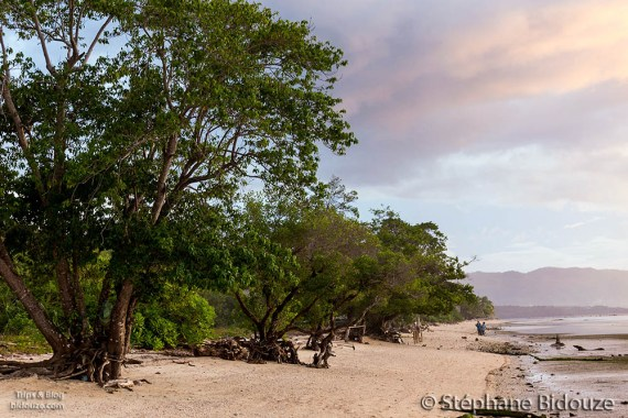 sandugan-tree-beach-philippines