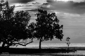 mangrove-tree-dark