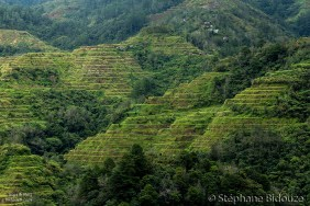 banaue-terrace-field-rice
