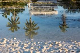 cocotier-philippines-plage