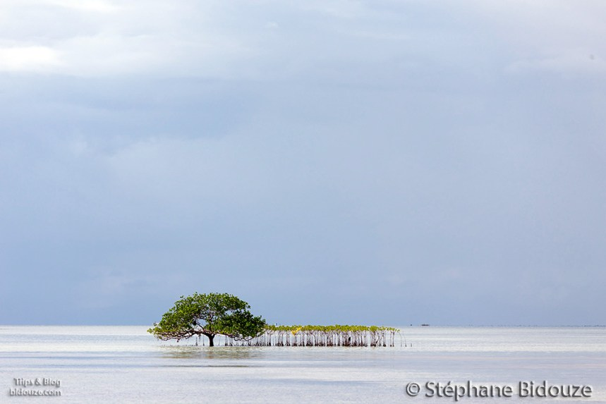 Mangrove trees in sea