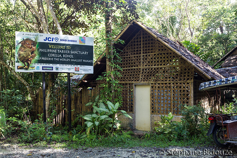 sanctuaire-tarsier-bohol