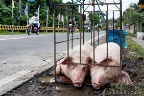 cochon-philippine-lechon
