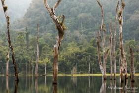 Les troncs émergent de l'eau, des orchidées poussent dessus.