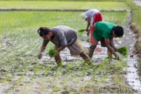 employés-riz-exploités-palawan-philippines