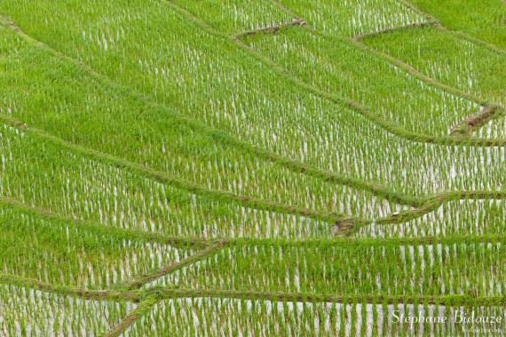 rizière-thailande-détail