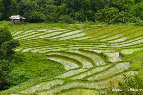 riz-riziere-Mae-Klang-Luang-village