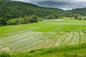 Mae-Klang-Luang-rizieres