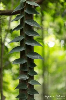 plante-grimpante-jungle
