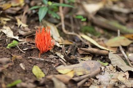 champignon-orange-tropical-thailande