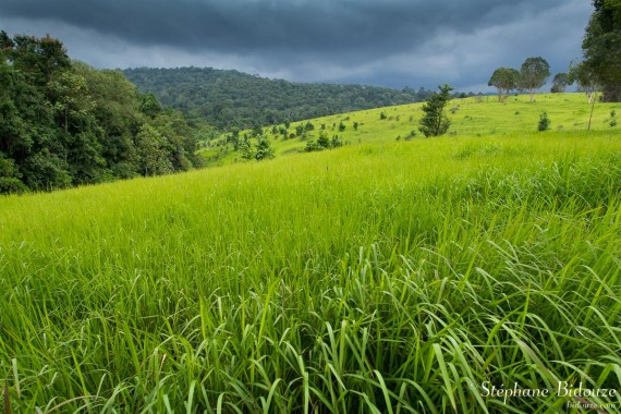 khao-yai-savane-orage-pluie