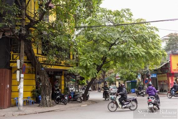 arbre-rue-hanoi-incliné-penché