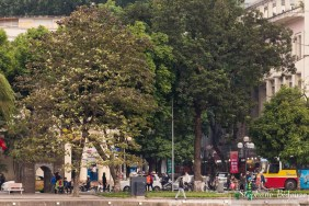 hanoi-arbre-vietnam-ville-rue