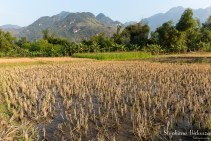 riziere-vietnam